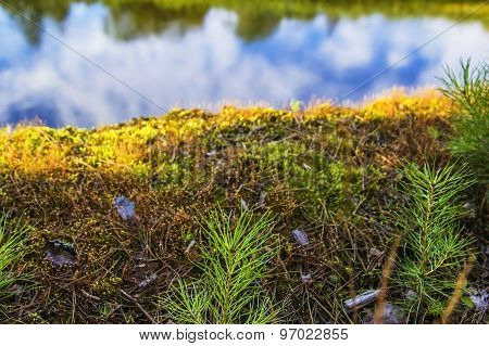 Moss background above the river landscape