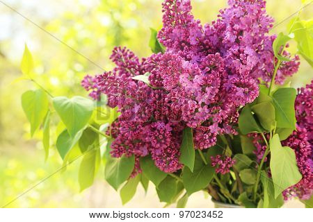 Purple Lilac Flowers, Outdoors