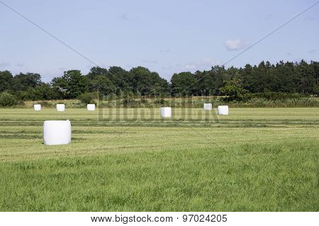 Wrapped Silage In Field