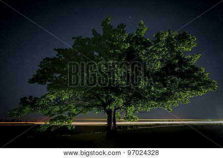 Oak Tree With Green Leaves On A Background Of The Night Sky And The Milky Way