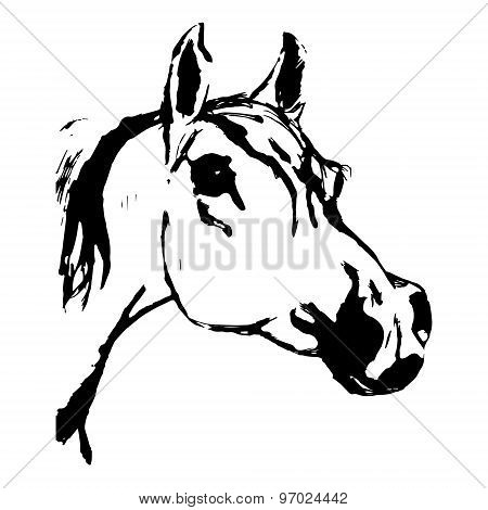 Arabian Horse (arab, Head). Drawing By Hand.