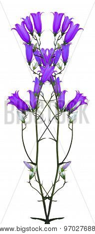 Flowers Bells