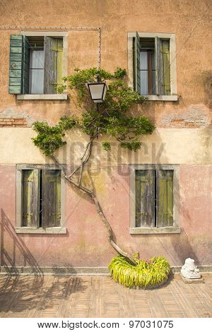 Green Colored Ivy Trees Squiggles On The Wall Of An Old House With Wooden Old Window
