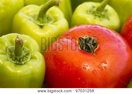 One Single Wet Tomato And Many Green Bell Pepper With Water Drops As Fresh Organic Vegetables