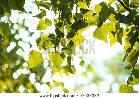 Beautiful tree leaves outdoors