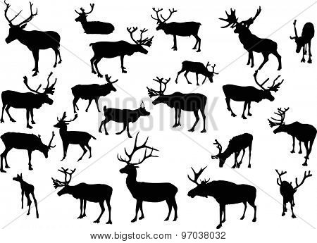 illustration with deer silhouettes isolated on white background