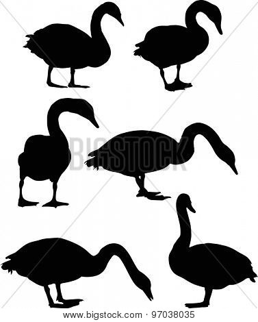 illustration with six swans isolated on white background