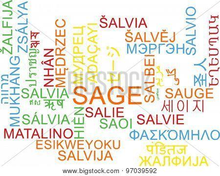 Background concept wordcloud multilanguage international many language illustration of sage