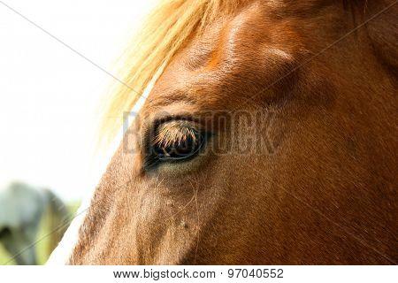 Portrait of beautiful brown horse, closeup