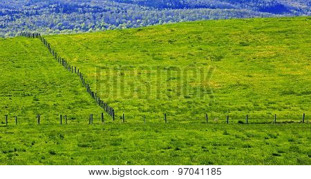 Green Countryside Fences Fields
