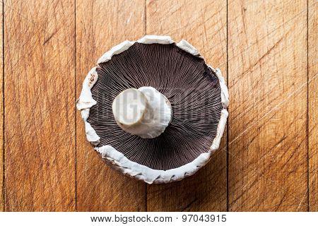 Closeup on one upside down mushroom