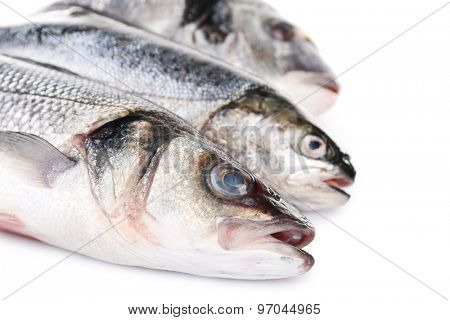 Fresh fish collection isolated on white