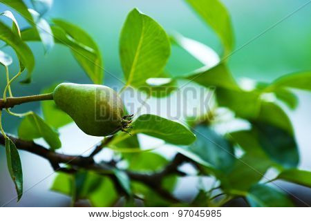 Beautiful spring leaves with fruits on tree outdoors