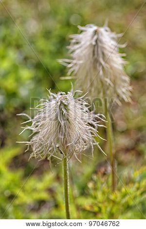 Fuzzy Wild Flowers