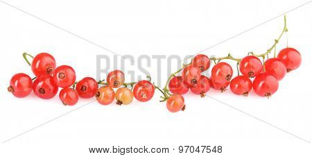 Fresh red currant isolated on white