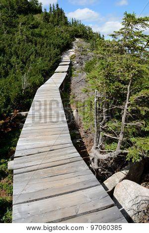 Wooden Bridge On Trail In Karkonosze Mountains