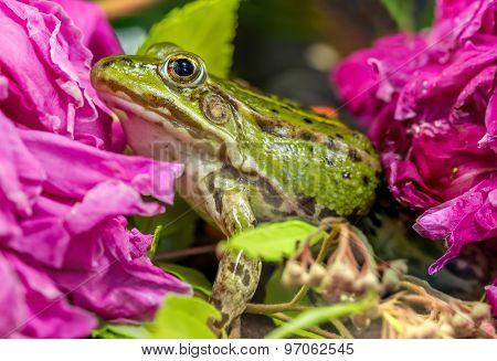 Frog Near Flowers