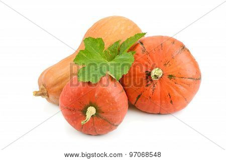 Ripe Pumpkin Isolated On White Background
