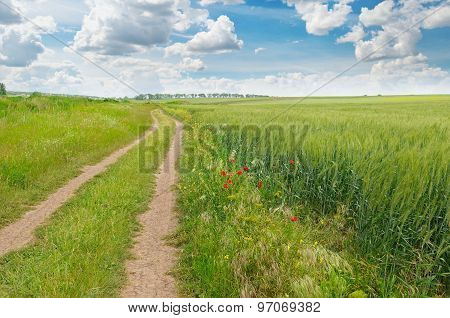 Field, Country Road And A Blue Sky