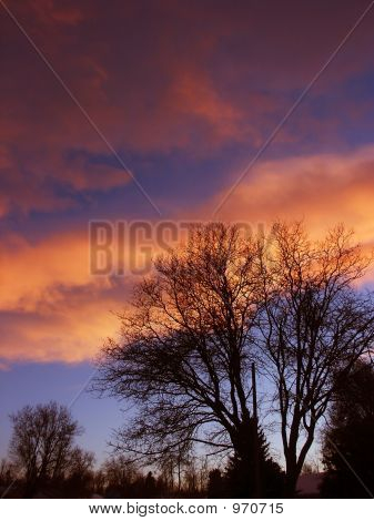Pink And Blue Sunset With Trees