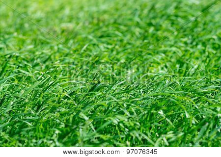 Abstract Background From A Green Juicy Grass