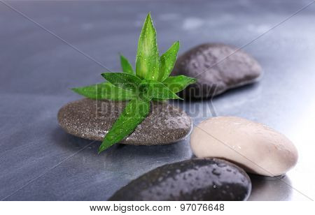 Wet spa stones with green leaves on gray background