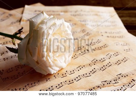 Beautiful rose on music sheets on wooden table, closeup