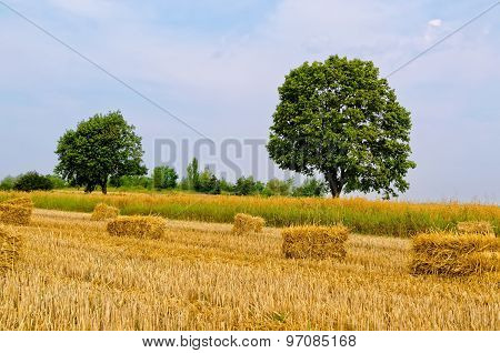 Haystacks on the field.