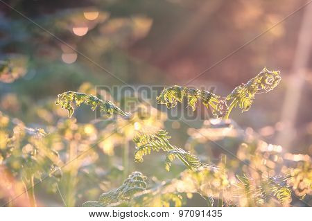 Fern Leaf In Morning Sunshine