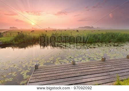 Dramatic Sunrise Over River With Pier And Cattle On Pasture