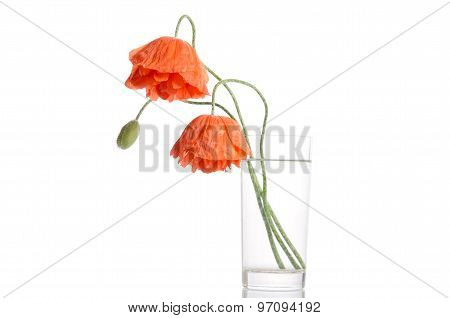 Poppies In Glass Vase Isolated On White Background