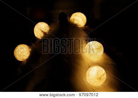 Light Bulbs On White Fur And Dark Background.