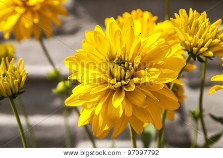 The Blossomed Yellow Flowers