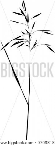 illustration with plant silhouette isolated on white background