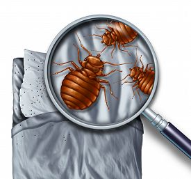 stock photo of parasite  - Bed bug or bedbug infestation concept as a magnification close up of parasitic insect pests on a pillow and the sheets as a hygiene symbol and metaphor for inspection and danger of bloodsucking parasites living inside a mattress - JPG