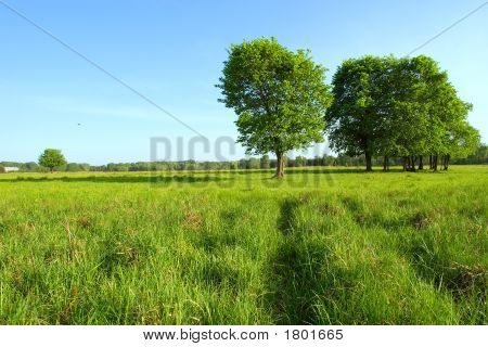 Ukrainian Spring Landscape - New Track In Grass Towards Group Of Trees