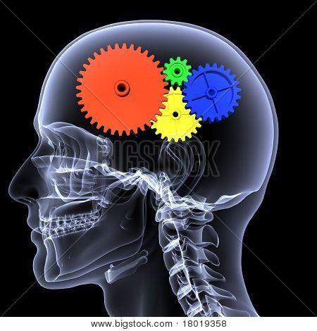 Skeleton X-ray - Gear Head