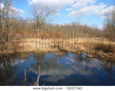 Kickapoo State Park - Illinois