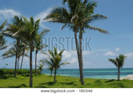 Beach And Palms