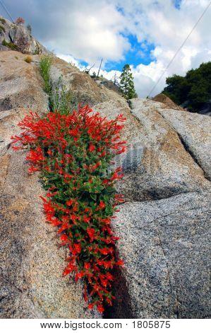 Flores silvestres vermelhos em granito