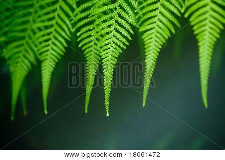 Líneas de helecho verde asintiendo con la cabeza bajo la lluvia.