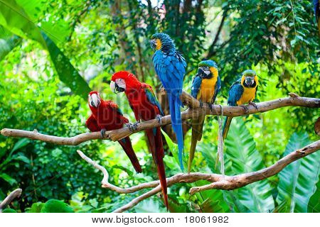 Red and blue macaw resting on branches of tree