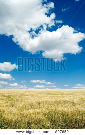El campo y el cielo.