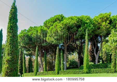 beautiful view of the mediterranian park with bright greenery