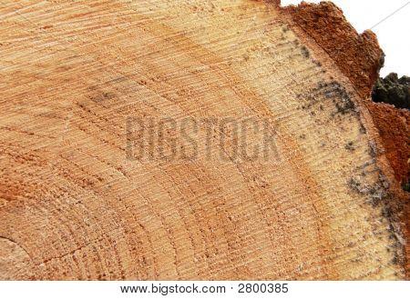 Wooden Circle Cut Texture