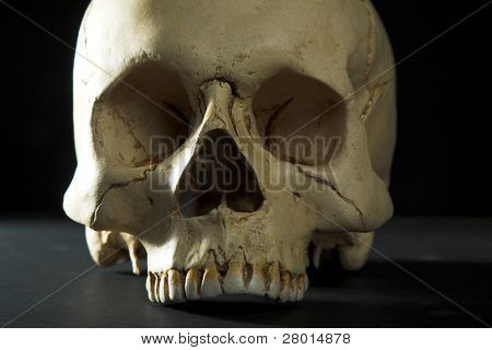 Homo sapience cranium isolated on black background