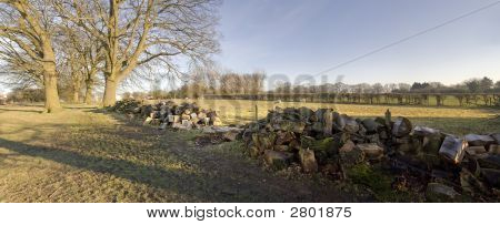 Cut Logs In Forest
