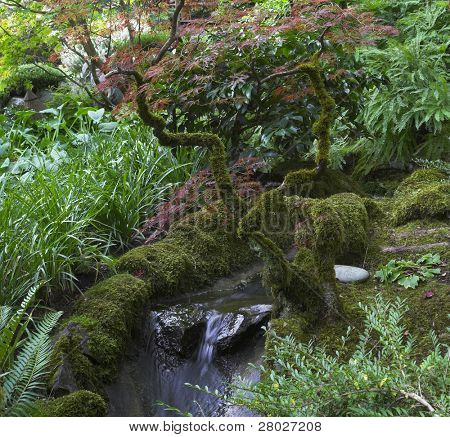 . Adquirió un musgo ramas curvadas sobre un pequeño cae en el jardín japonés en el gran parque