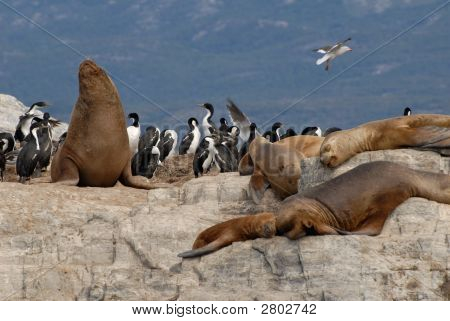 Relaxinng Sealions And Sea Birds.