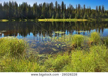 El lago de montaña silenciosa rodeado por piel-árboles y arbustos en el otoño